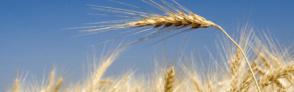 En av världens bästa jordbruksarealer